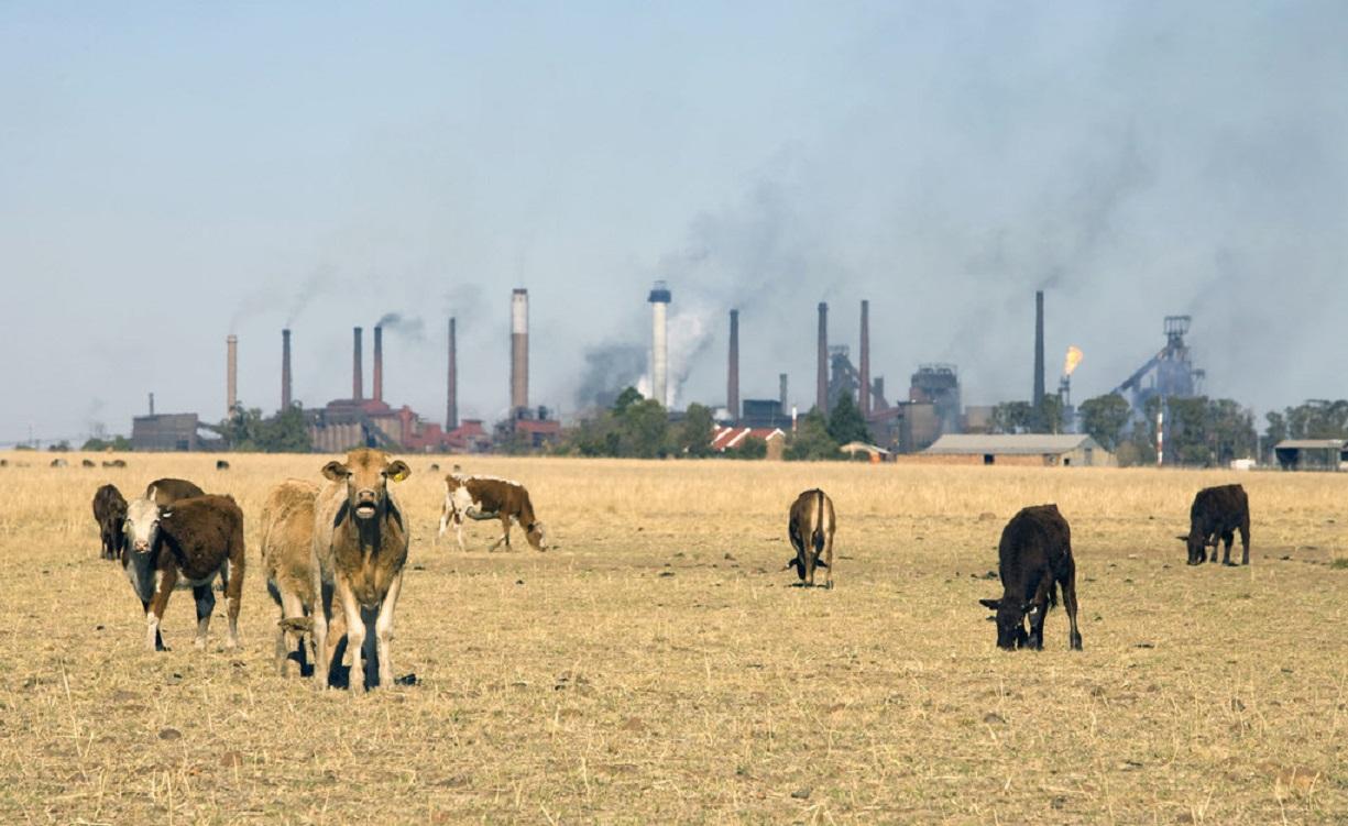 Los problemas medioambientales también causan enfermedades y sufrimiento en los más chicos.