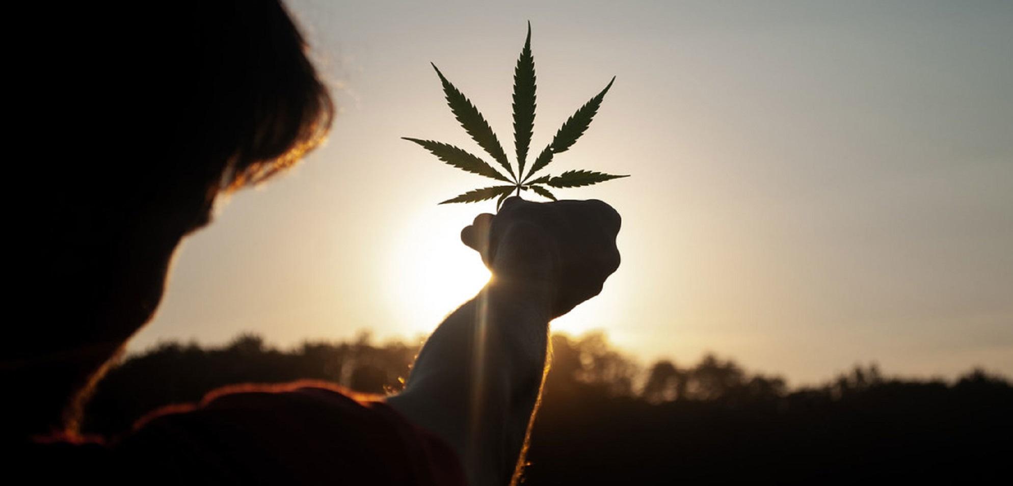 Un nuevo status legal global para el cannabis medicinal.