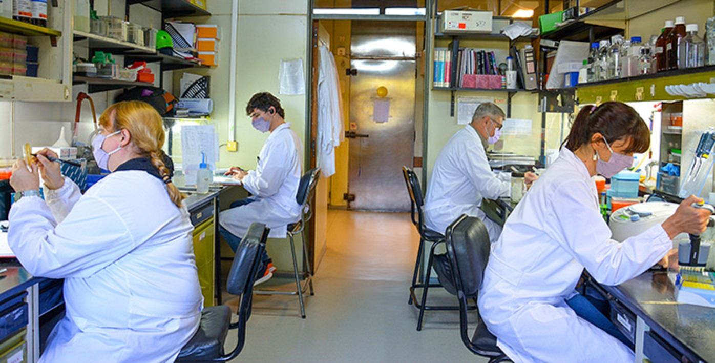 Verónica López (izq.), Felipe Nuñez, Eduardo Cafferata y Sabrina Vinzón, investigadores del Laboratorio de Terapia Molecular y Celular en el Instituto Leloir.