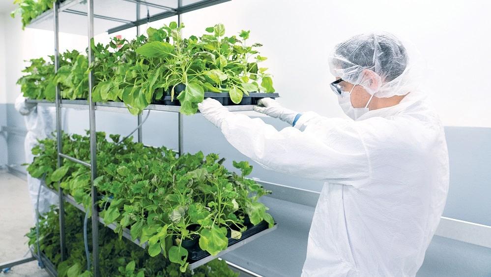 Aumenta el interés por los productos farmacéuticos de origen vegetal para uso humano.